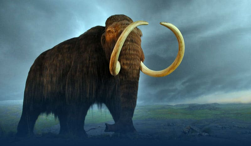Scientists want to bring back the woolly mammoth